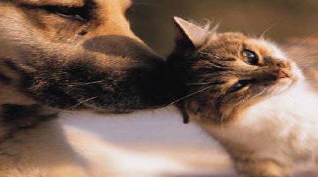 cat-dog-360x350