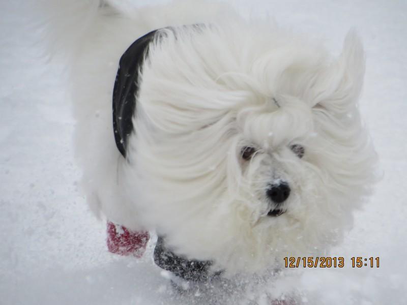 chablis-dans-la-neige2-e1393021833536