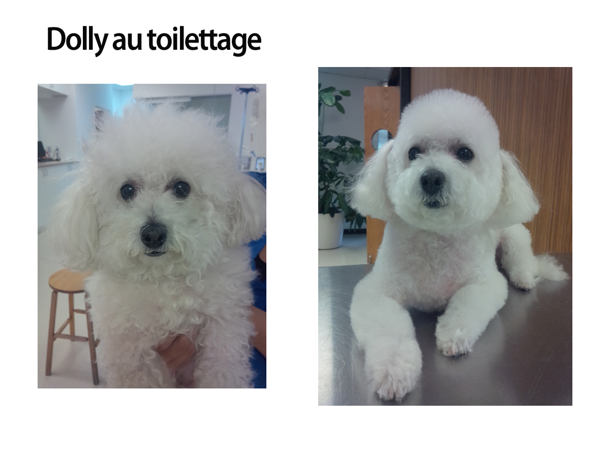 dolly-au-toilettage