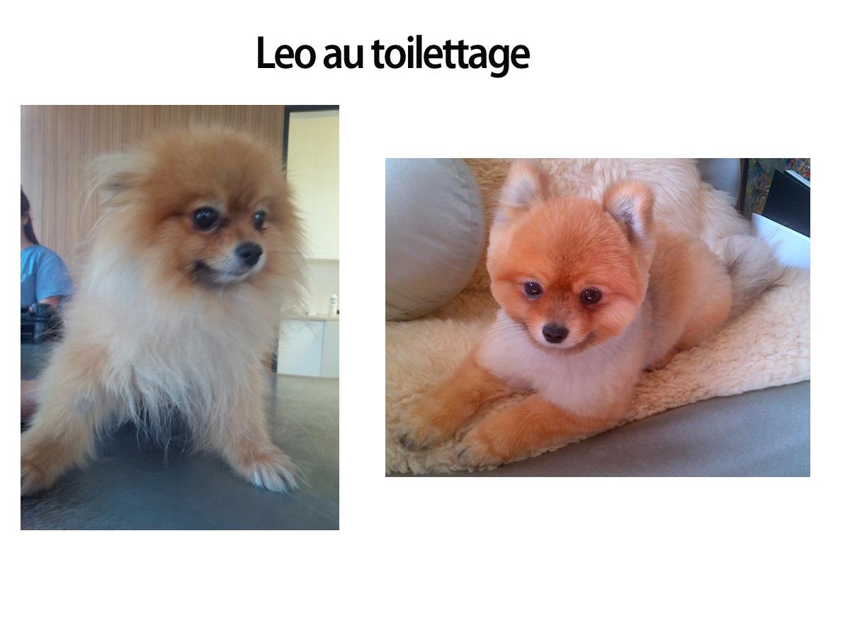 leo-au-toiilettage