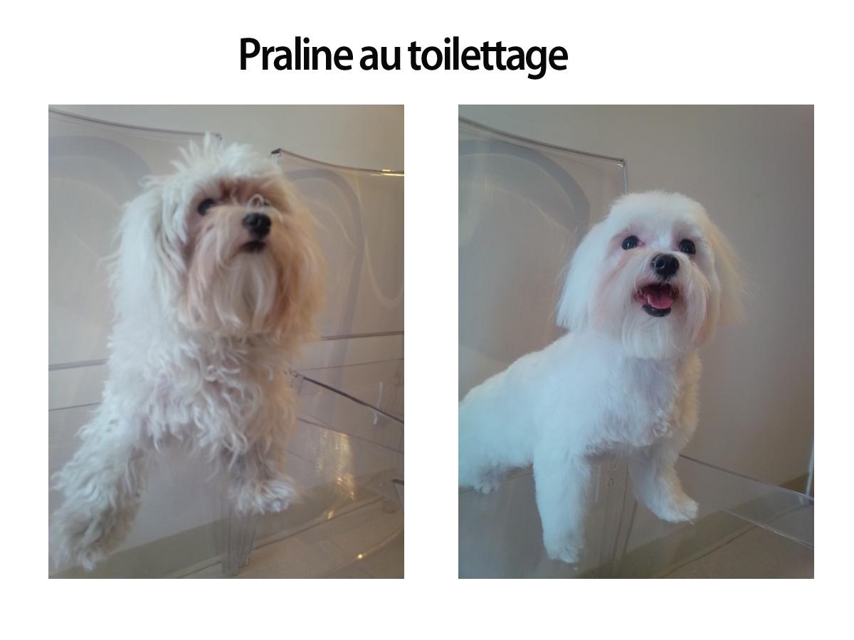 praline-au-toilettage