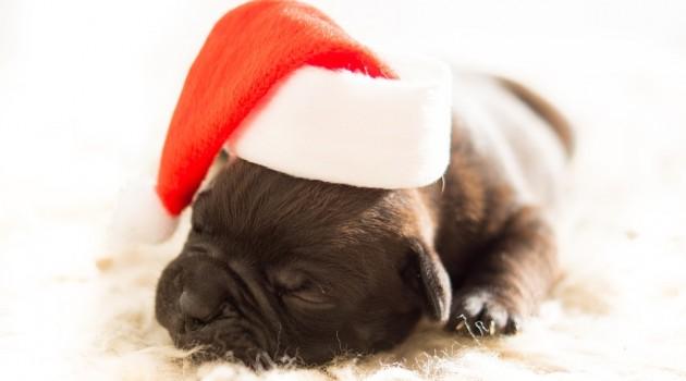 Un animal comme cadeau de Noël
