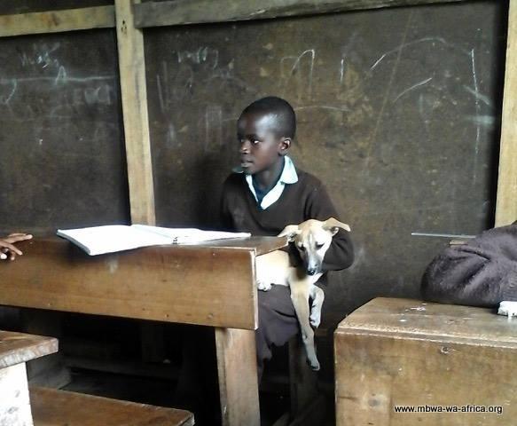 Votre vétérinaire en Tanzanie!