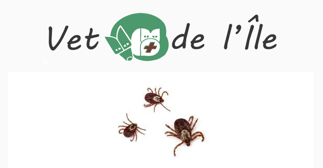 Attention, les ticks se propagent!